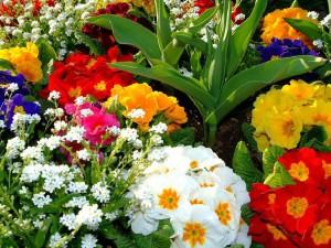 fleurs-des-marchés1